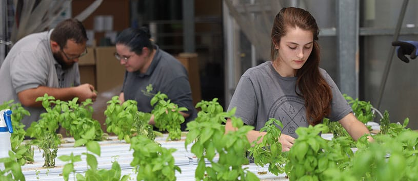 A Bidwell Training Center student works on some plants in the greenhouse
