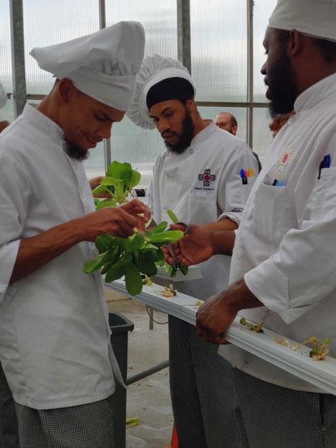 Bidwell's Culinary Arts students looking at green plants and herbs.